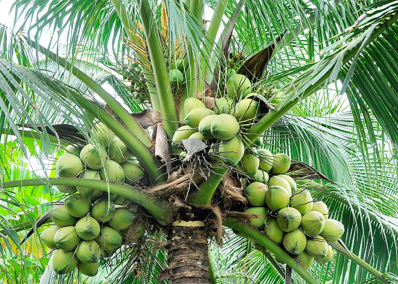 Get Inspired With Our Coconut Products - Biona